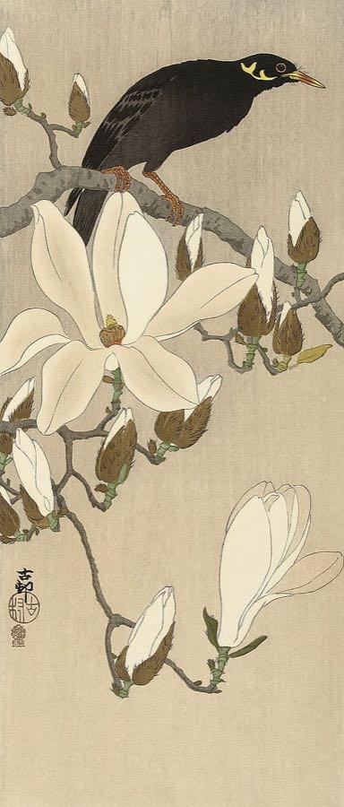 K2723D - Koson, Ohara - Myna on Magnolia Branch, 1900-1910