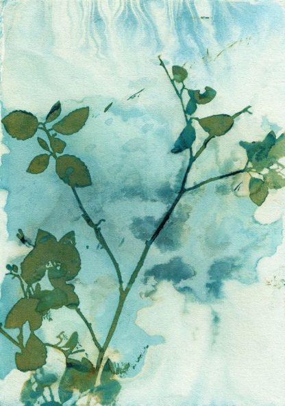 M1672D - McCurdy, Krista - Leaves and Sky