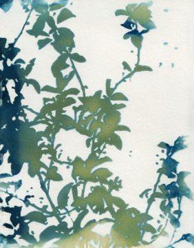M1674D - McCurdy, Krista - Shadow Floral
