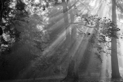 O340D - Oldford, Tim - In a Haze