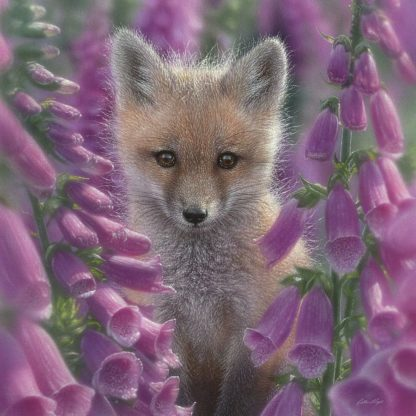 SBBC2081 - Bogle, Collin - Red Fox - Foxgloves