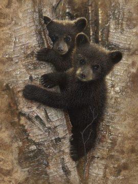 SBBC2092 - Bogle, Collin - Curious Cubs