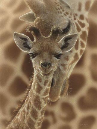 SBBC2122 - Bogle, Collin - Newborn Giraffe
