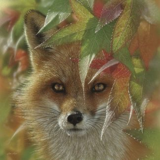 SBBC2153 - Bogle, Collin - Autumn Red Fox