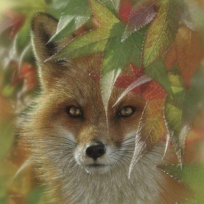 SBBC2153 - Bogle, Collin - Autumn Red Fox