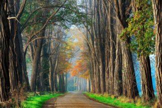 V719D - Van de Goor, Lars - Acacias in Autumn