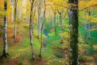 V723D - Van de Goor, Lars - Dream of Birches