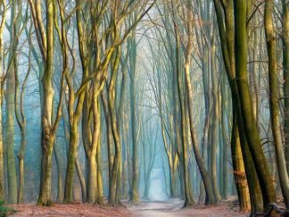 V724D - Van de Goor, Lars - Light & Trees