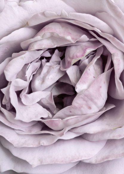 MF969-1448 - Design Fabrikken - Rose Heart