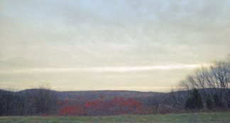 P1170D - Pardo, Yigal - Autumn View