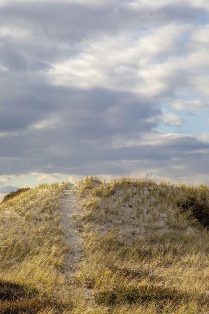 R1246D - Ryan, Brooke T. - Dunes Trail