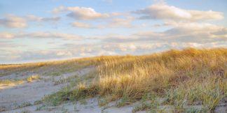 R1247D - Ryan, Brooke T. - Grassy Dunes Panorama