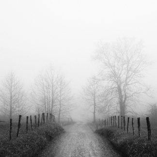 B3795D - Bell, Nicholas - Sparks Lane in Fog