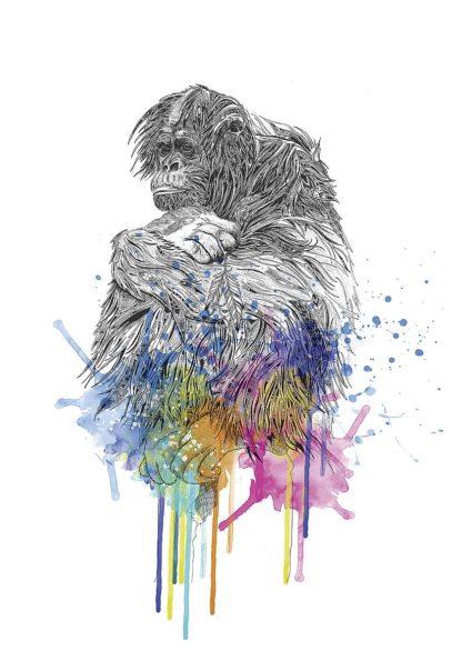 R1278D - Roberts, Karin - Orangutan