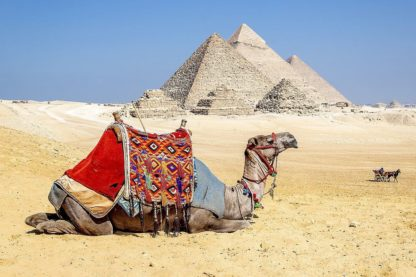 S1844D - Silver, Richard - Camel Resting by the Pyramids, Giza, Egypt