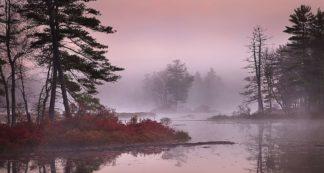 Z1575D - Zephyr, Patrick - Pink Fog