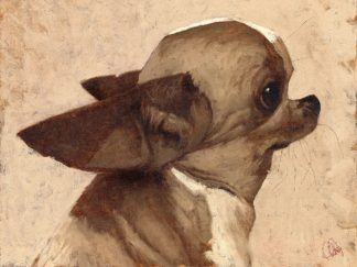 F797D - Fluharty, Thomas - Profile-Chihuahua