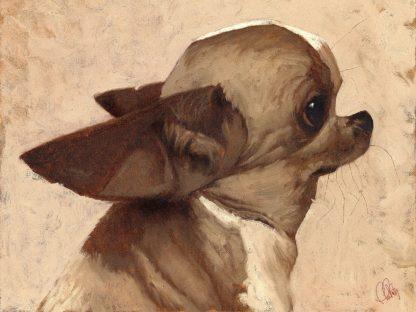 F797D - Fluharty, Thomas - Profile-Chihuahua