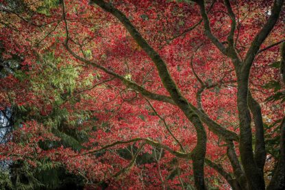 O395D - Oldford, Tim - Autumn Beauty