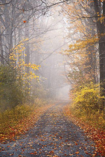 R1307D - Ryan, Brooke T. - Road and Autumn Mist