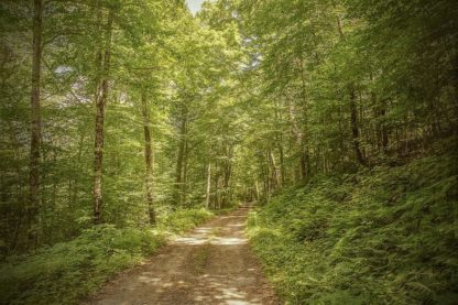 R1309D - Ryan, Brooke T. - Forest Road