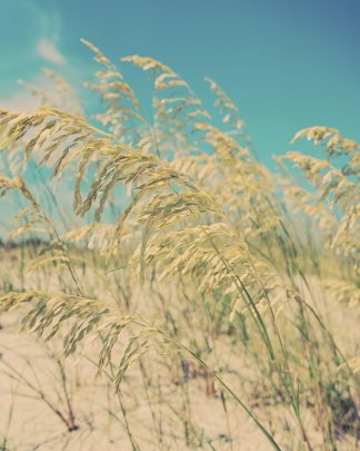S1864D - Soffia, Myan - Sea Oats