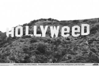 U724 - Unknown - Hollyweed