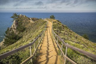 R1324D - Romanowicz, Adam - Path To Muir Beach