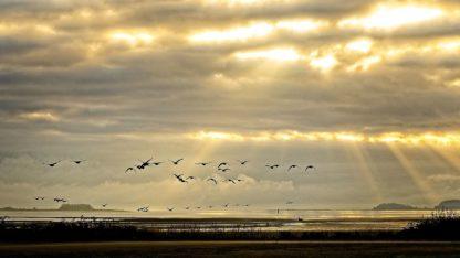 B3892D - Burdick, Chuck - Sunrise on The Estuary