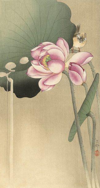 K2743D - Koson, Ohara - Songbird and Lotus, 1900-1936
