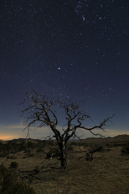 S1880D - Severn, Shawn/Corinne - Mohave at Night No. 1