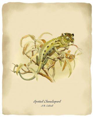 T712D - Tannehill, Angela - Chameleopard