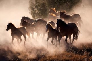D2059D - Dearing, Lisa - Horses