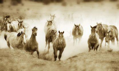 D2061D - Dearing, Lisa - San Cristobol Horses