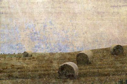 R1345D - Ruest, Liz - Dunnotar Fields