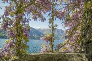 R1356D - Ryan, Brooke T. - Wisteria and Mountains Ð Lago di Como