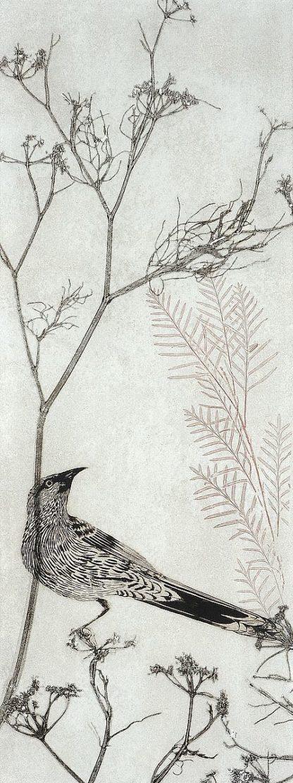 R1375D - Rice, Trudy - Wattlebird Resting on a Branch
