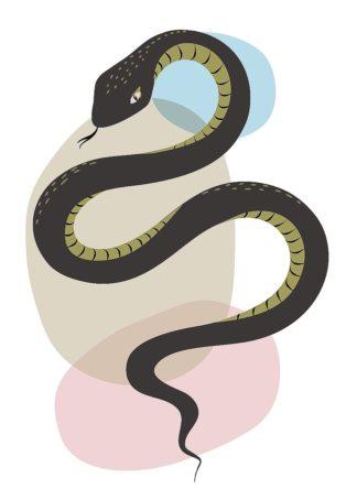 A671D - Ayse - Snake