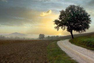 B4039D - Blaustein, Alan - Tuscan Farm Road #1