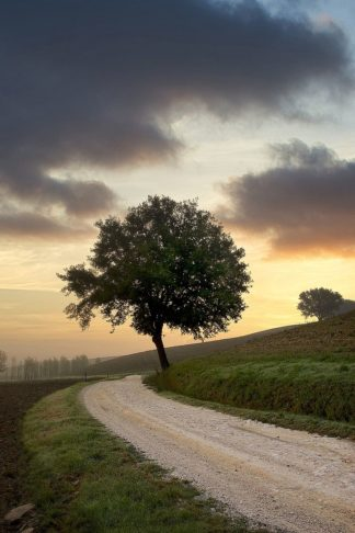 B4040D - Blaustein, Alan - Tuscan Farm Road Sunrise #2