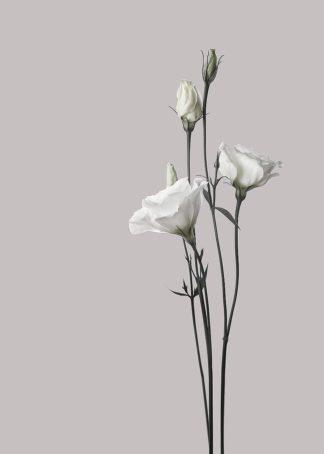 MF969-1747 - Design Fabrikken - Flower 2