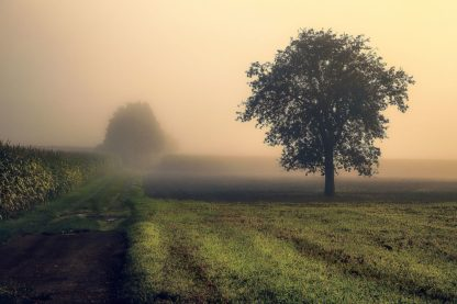 A681D - Artemiadi, Dora - Morning Mist