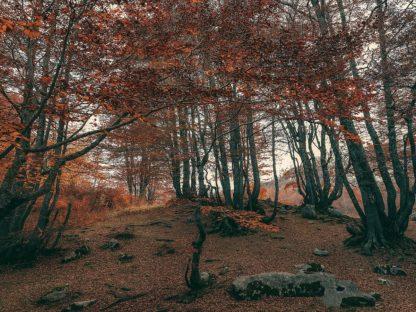 A685D - Artemiadi, Dora - The Orange Season