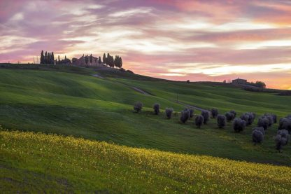 A686D - Artemiadi, Dora - Tuscany Palette