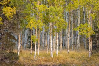 G2142D - Gavrilis, John - June Lake Aspen