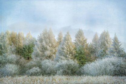 R1395D - Ryan, Brooke T. - Winter Wonderland
