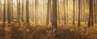 W1150D - Winstanley, Ian - Wyre Forest