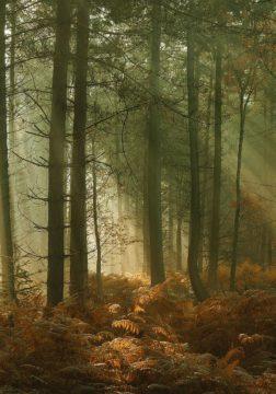 W1151D - Winstanley, Ian - Wyre Forest 3