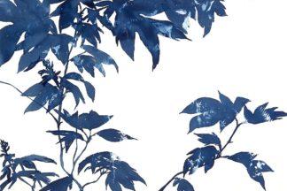M1760D - MacCollum, Cynthia - Quercifolia