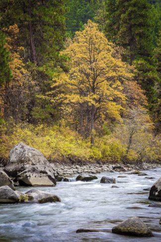 B4127D - Broom, Michael - Autumn Across The River